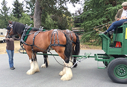 Draught Horse Parade Harness